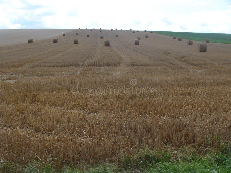 Холм сена стоковая фотография rf