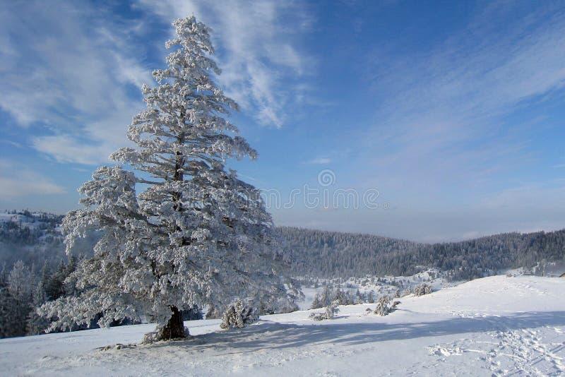 холодная зима дня стоковое изображение rf