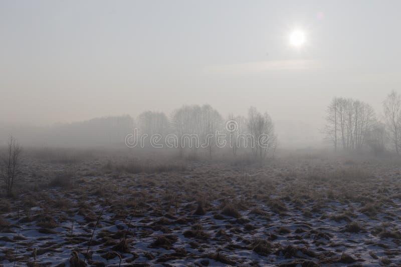 холодная зима утра стоковые фотографии rf