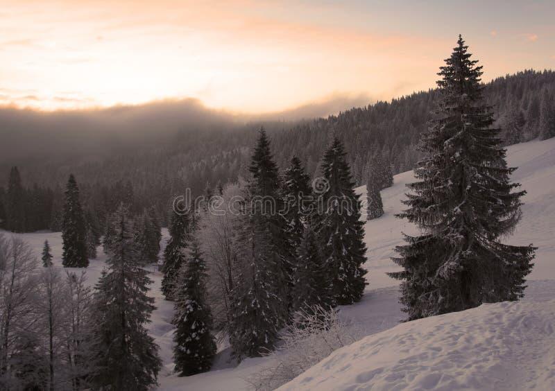 холодная зима стоковые изображения rf