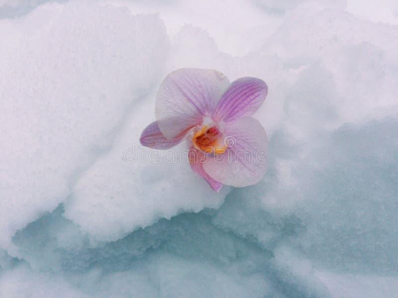 Холодная красотка стоковое изображение