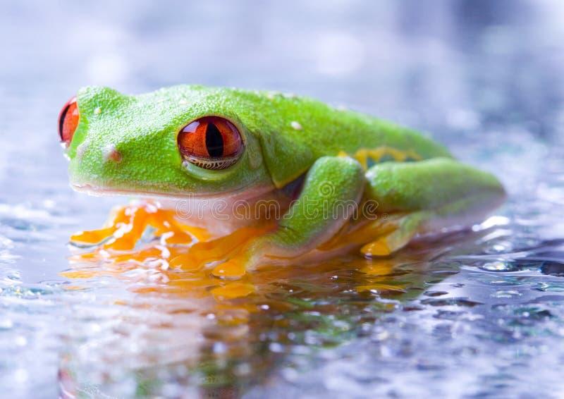 холодная лягушка стоковая фотография