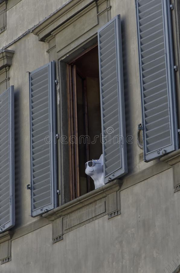Холодная марионетка французского бульдога на окне стоковые изображения