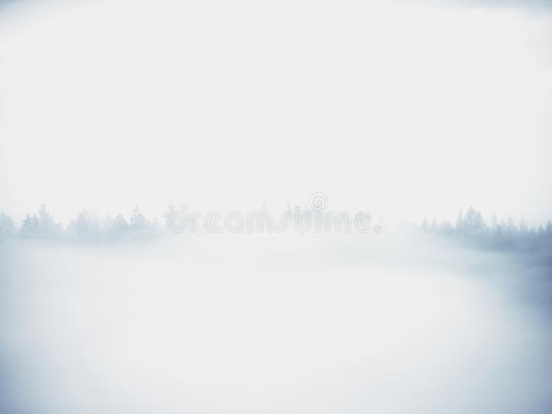 Холодное туманное голубое утро За минуту до восхода солнца в красивой долине скалистого парка Пики дерева стоковое изображение rf