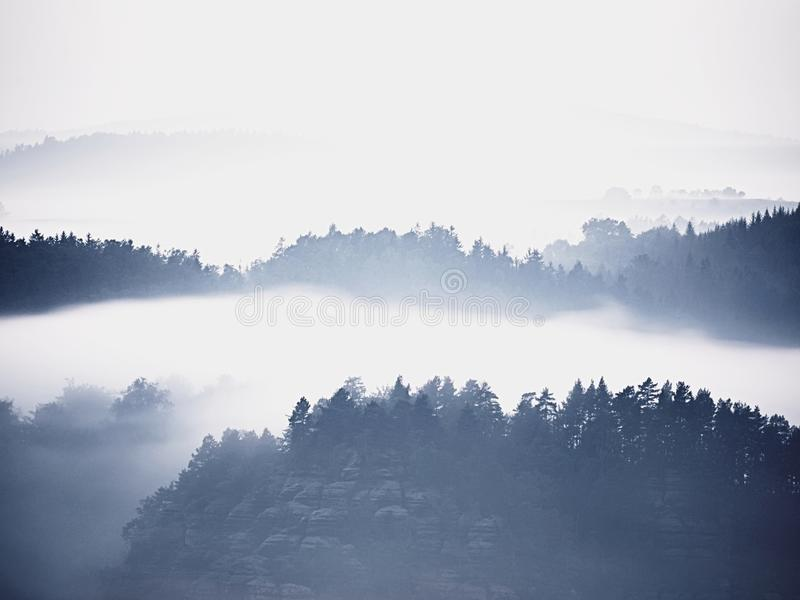 Холодное туманное голубое утро За минуту до восхода солнца в красивой долине скалистого парка Пики дерева стоковое фото rf