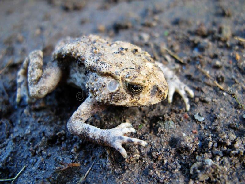 Холодные лягушки положенные на том основании стоковое фото