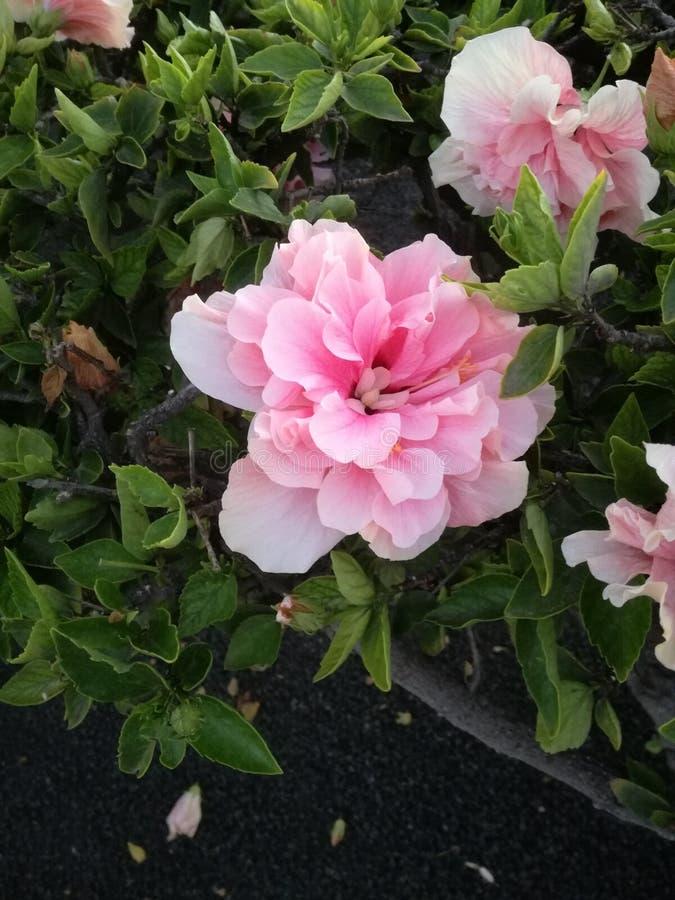 Холодные цветки стоковое изображение rf