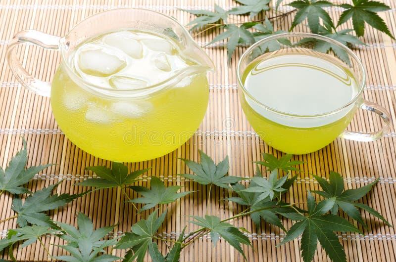 Холодный зеленый чай стоковое изображение rf