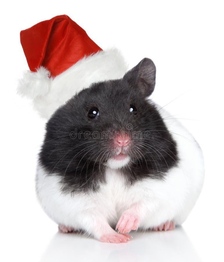 Хомяк в шлеме рождества на белой предпосылке стоковые изображения rf