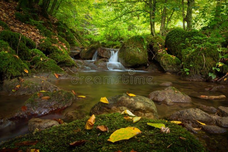 Хорватия - природный парк Papuk - заводь леса стоковая фотография