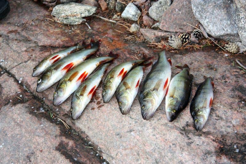 Хороший удить на карельском озере стоковое изображение rf