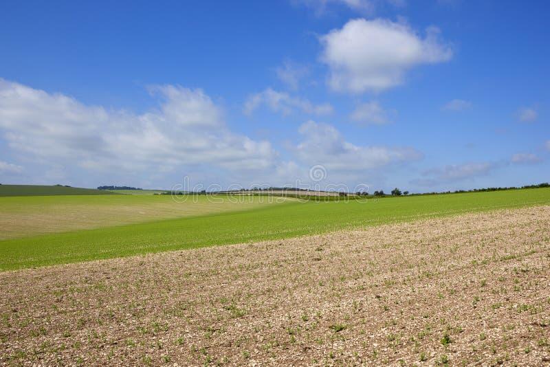 Холмообразный урожай гороха стоковые фото