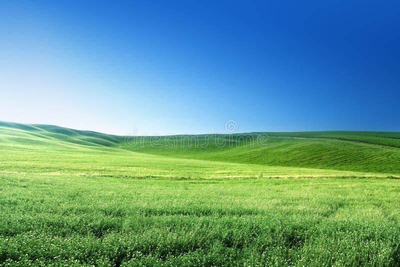 Холмы в солнечном дне Тоскане стоковая фотография