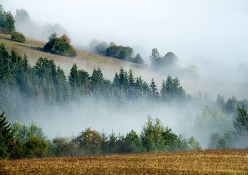 Холмы и туман стоковое изображение rf