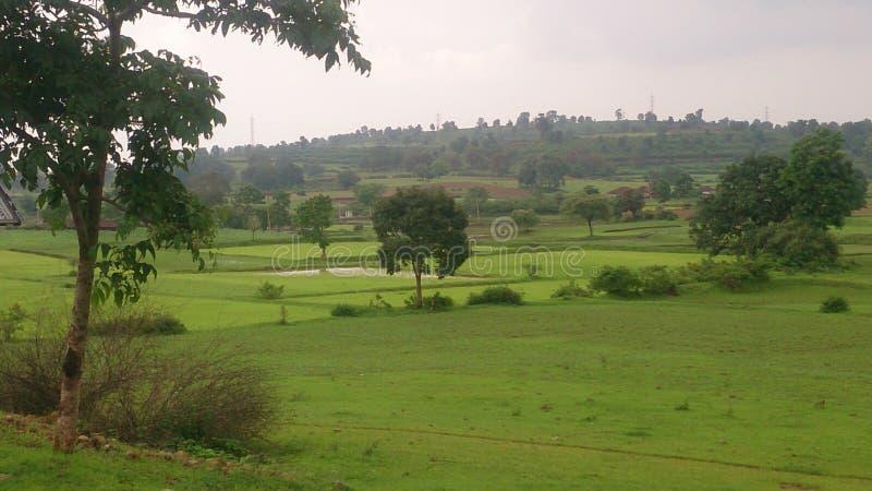 Холмы с зелеными бирками стоковая фотография