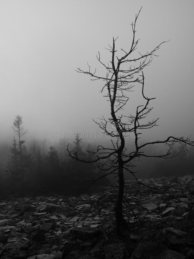 Холмы увеличенные от предпосылки осени раннего утра туманной. Черно-белое фото. стоковая фотография rf