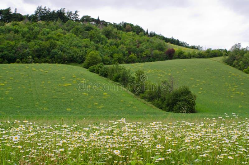 Холмы apennines Тоскана стоковые изображения