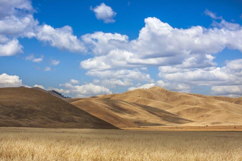 холмы california золотистые стоковые изображения rf