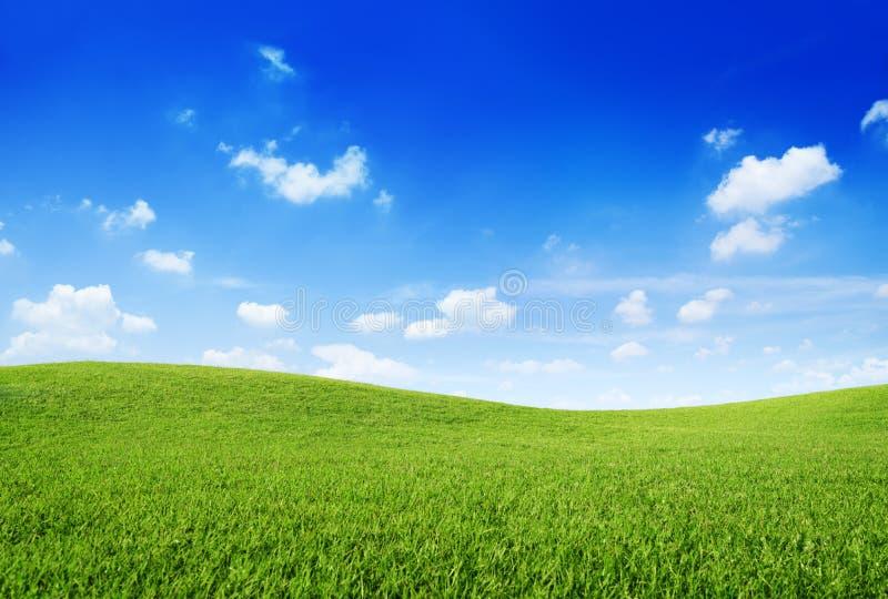 Холм зеленой травы и небо ясности голубое стоковая фотография rf