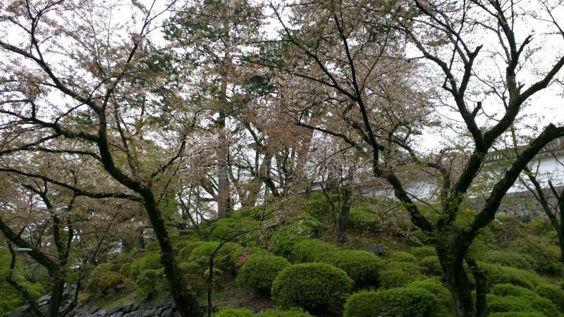 Холм и деревья стоковые изображения