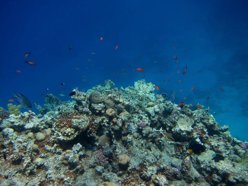 Холм коралла стоковое фото