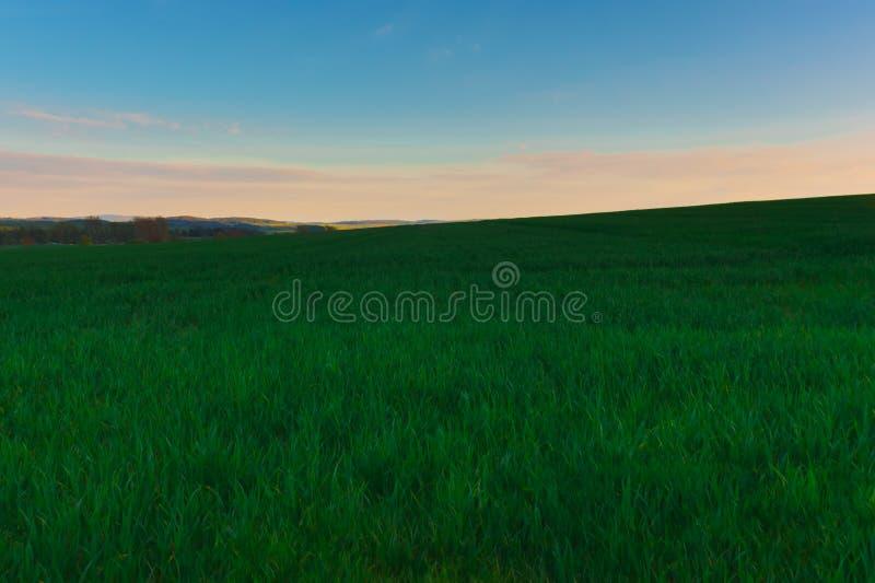 Холм на пшеничном поле стоковые изображения rf