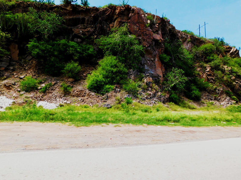 Холм с зеленой жизнью стоковые фотографии rf