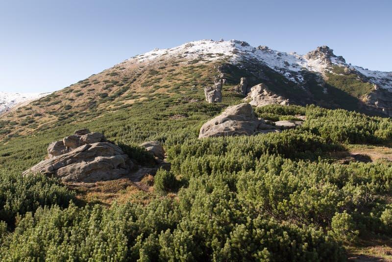 Холм Vukhatyi Kamin, прикарпатские горы стоковая фотография rf