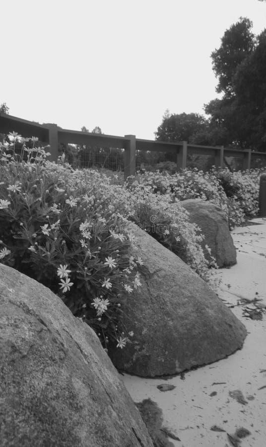 холодная весна стоковое фото