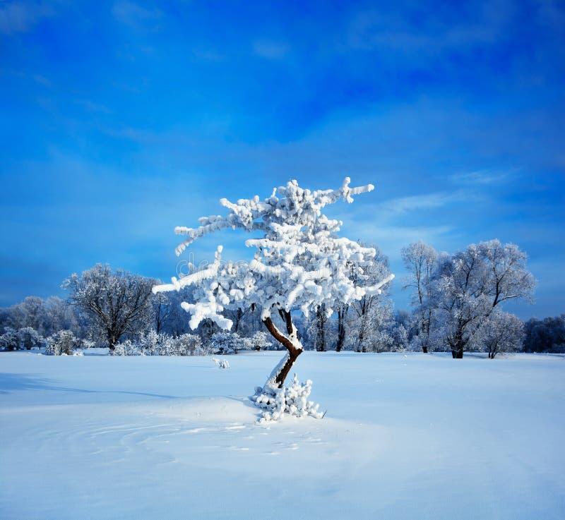 холодная зима вечера стоковая фотография rf