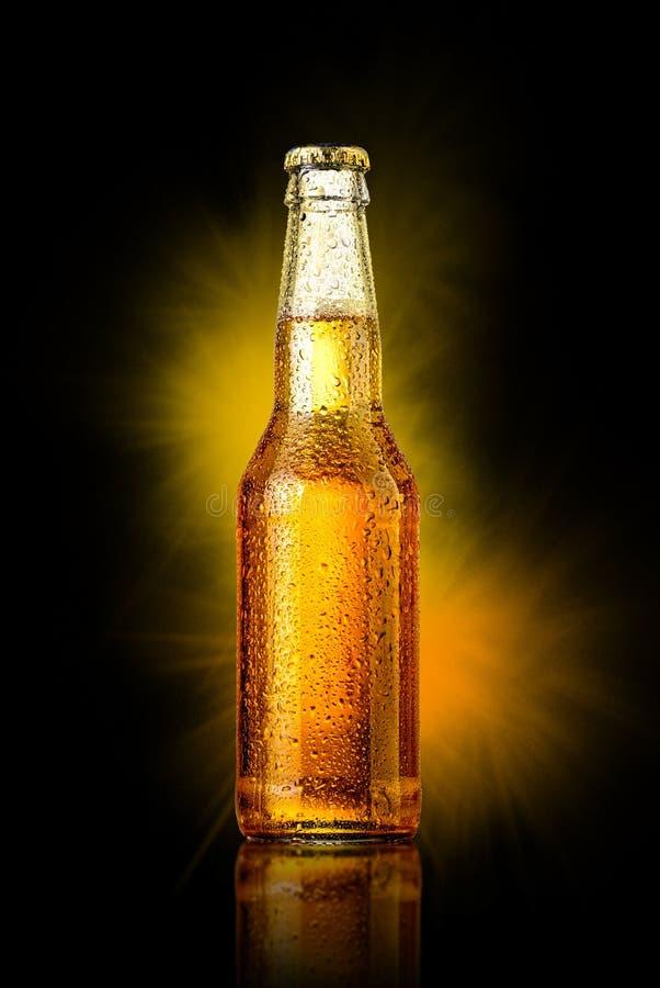 Холодная пивная бутылка стоковая фотография