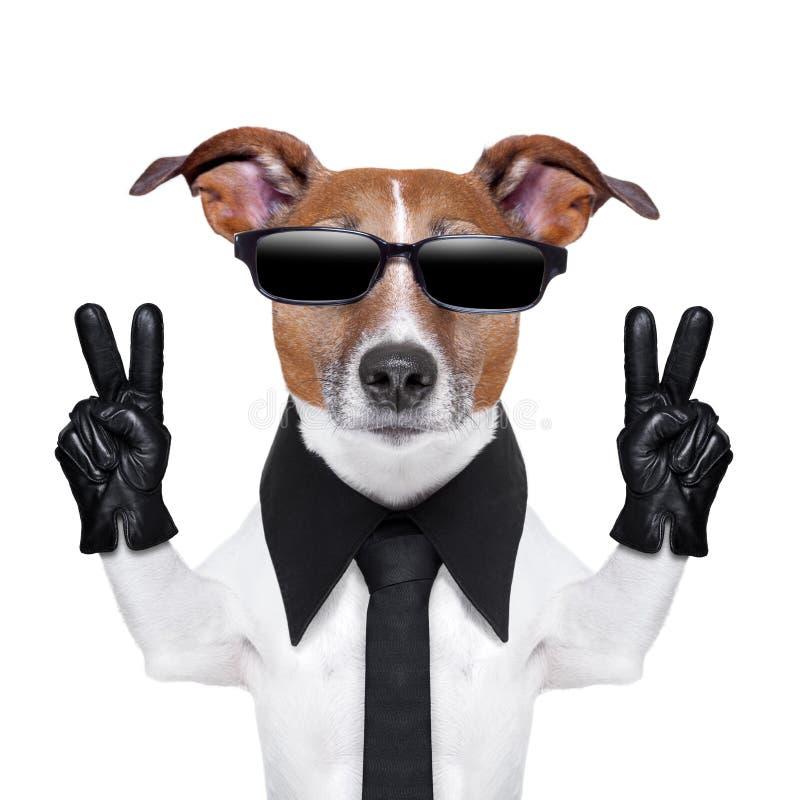 Холодная собака стоковые фото