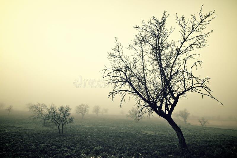 Холодное утро стоковая фотография rf