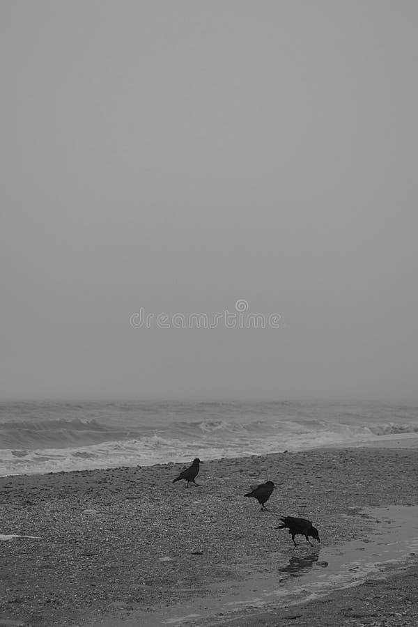 Холодное Чёрное море стоковые изображения