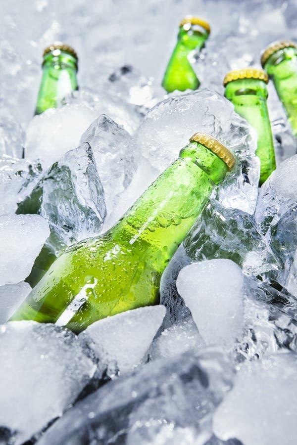 Холодные пивные бутылки на льде 1 стоковые фото
