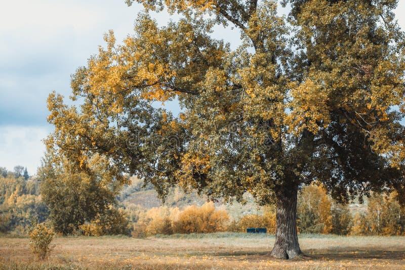 Холодные цвета осени стоковое фото rf