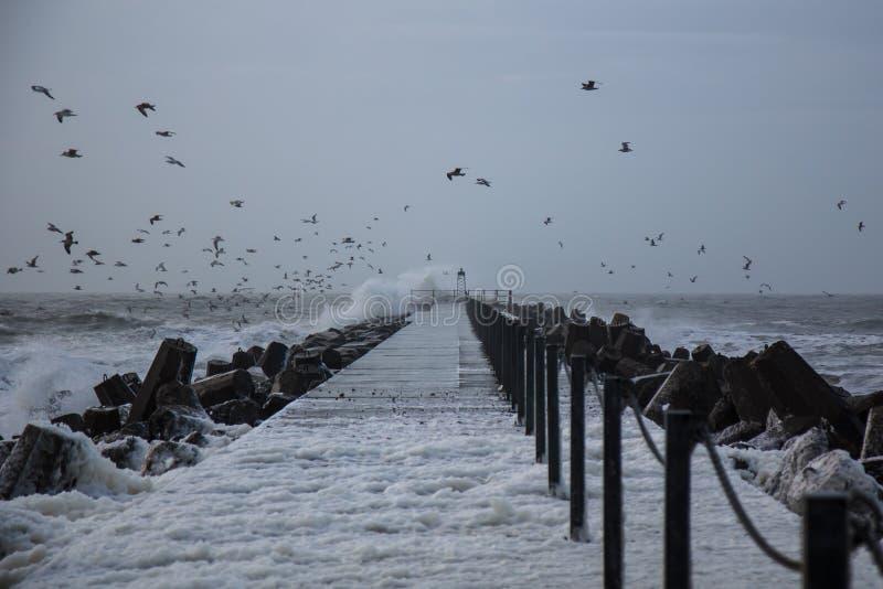 Холодные waiwes, пена моря и berds на Thisted, Дании стоковые изображения rf