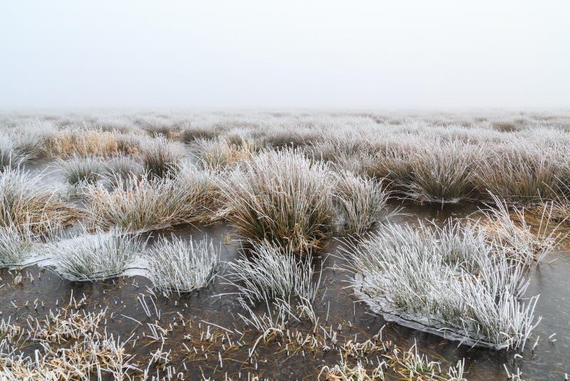Холодный ландшафт зимы заболоченных мест с туманом и налет инеей стоковое изображение