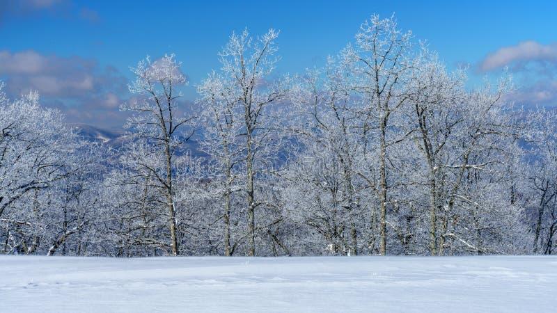 Холодный, хрустящий зимний день стоковые фотографии rf