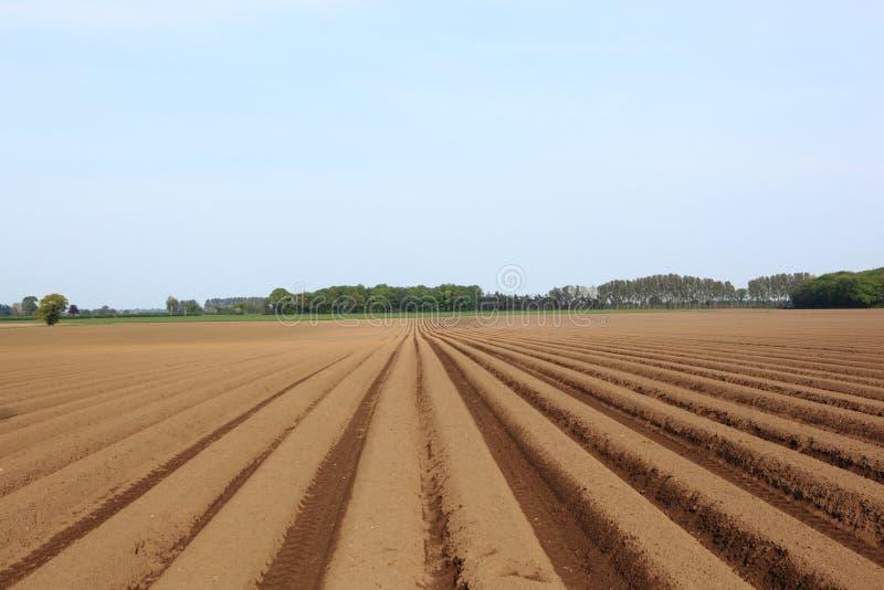 Хребтообразная и взборозженная почва поля картошки в ландшафте весеннего времени стоковое изображение rf