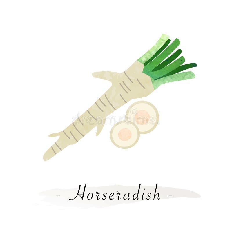 Хрен красочного вектора текстуры акварели здоровый vegetable бесплатная иллюстрация