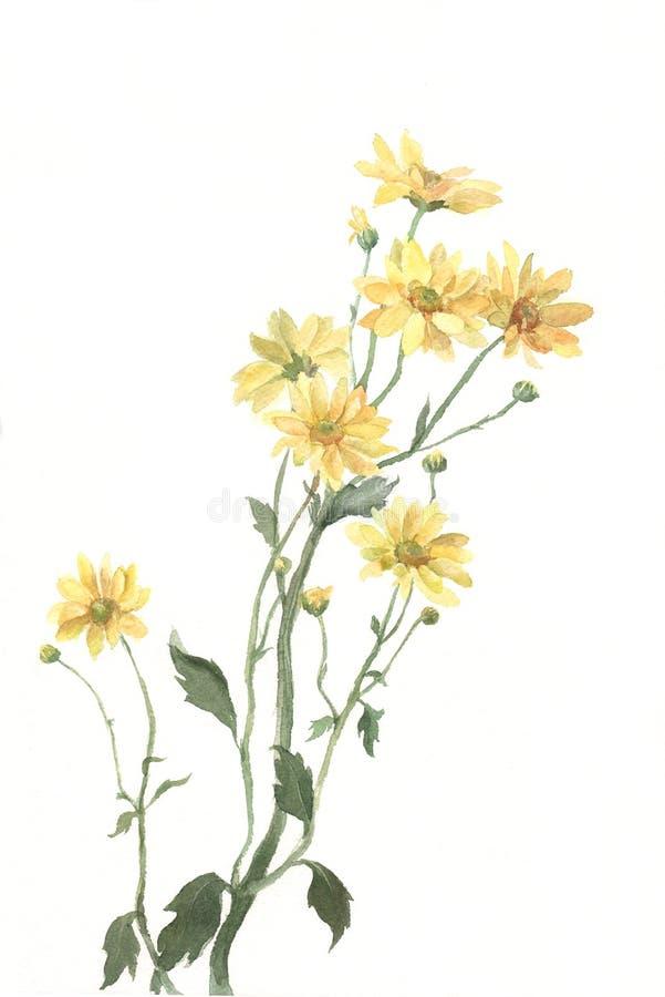 хризантема цветет желтый цвет акварели картины иллюстрация вектора
