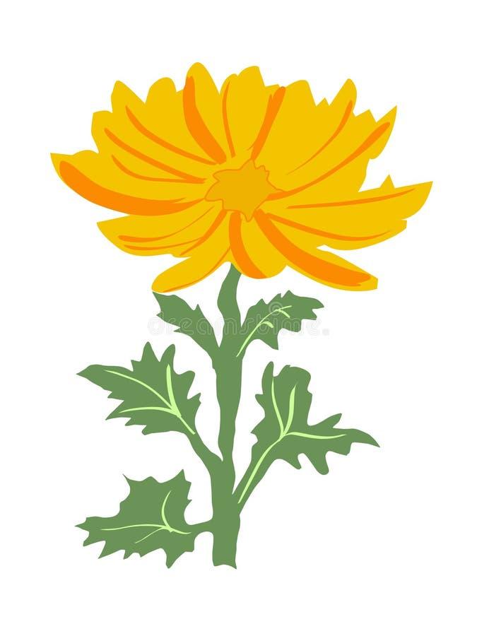 хризантема иллюстрация штока