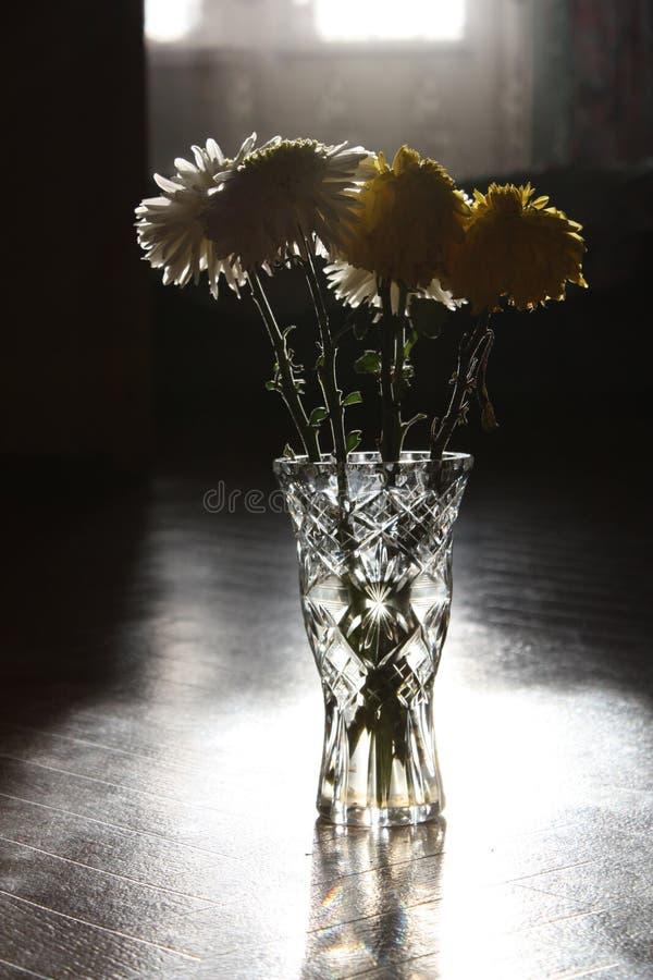 хризантема стоковая фотография