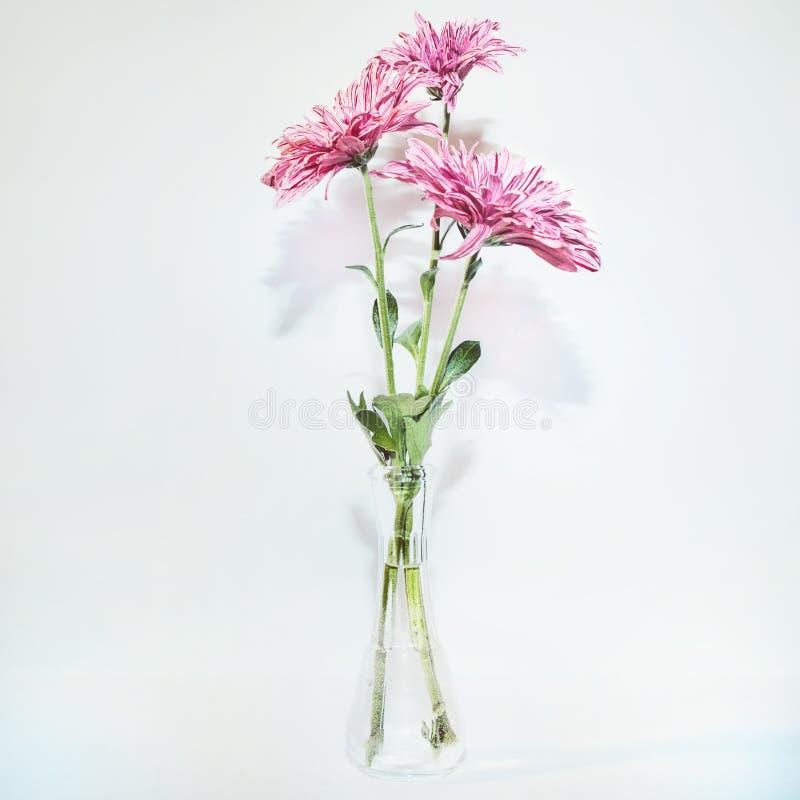 3 хризантемы в стеклянной вазе стоковые изображения