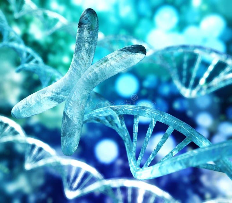 Хромосома x и ДНК иллюстрация штока