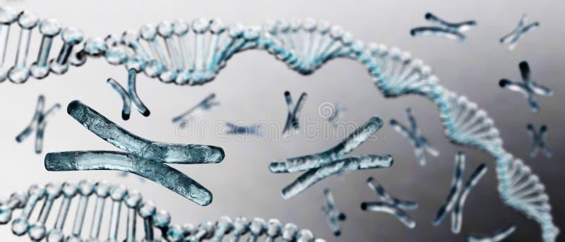 Хромосома, дна стоковое изображение