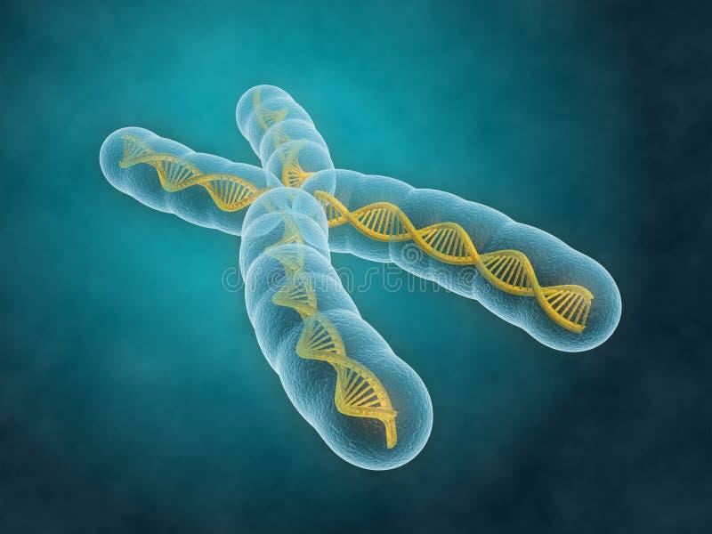 хромосома иллюстрация вектора