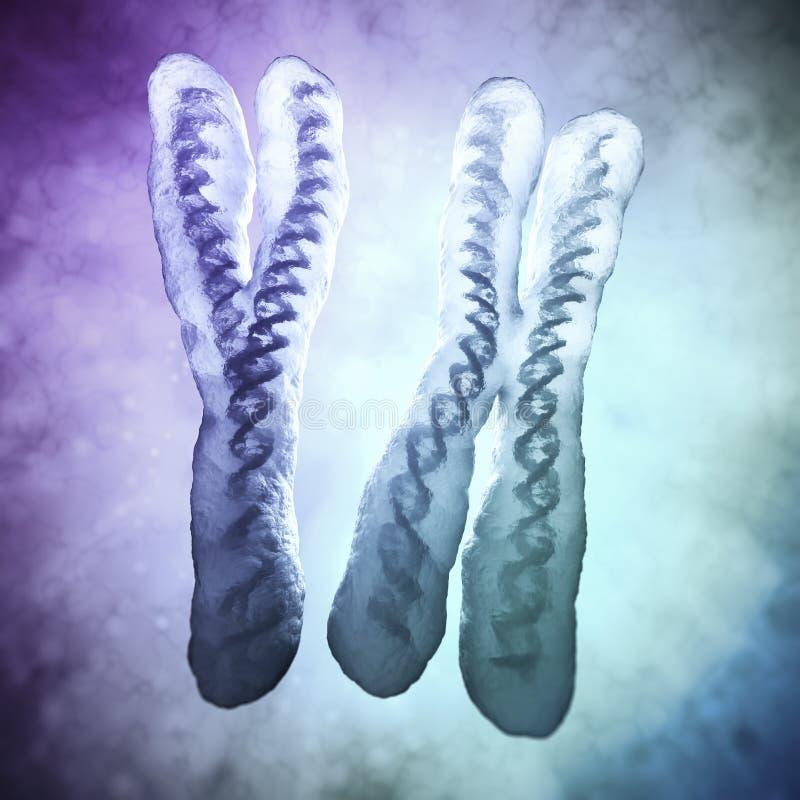 Хромосомы x и y -
