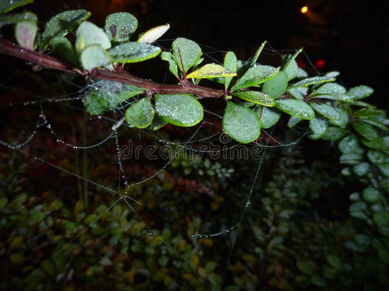 Хрупкая сеть паука на ветви в ноче стоковое изображение rf